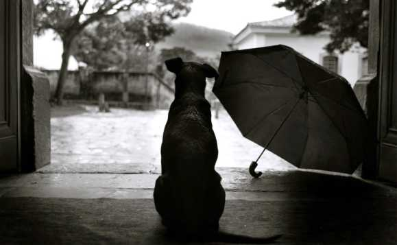 chuva doutor cão
